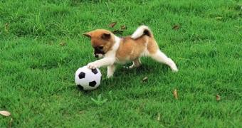 cane-gioca-calcio